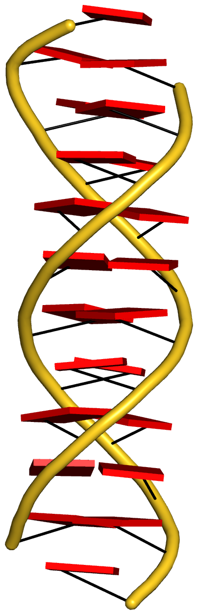 Parallel double-stranded helix of poly(A) RNA (4jrd)