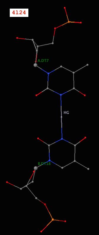 Metallo T-Hg-T base pair (PDB id: 4l24)