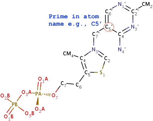 Molecular image of TPP (thiamine diphosphate)